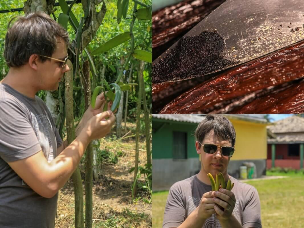 Gousses de vanille - Madagascar