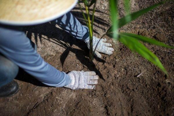 baies-dacai-poudre-internet-biocoop-magain-bio-acheter-achat-vente-direct-producteur