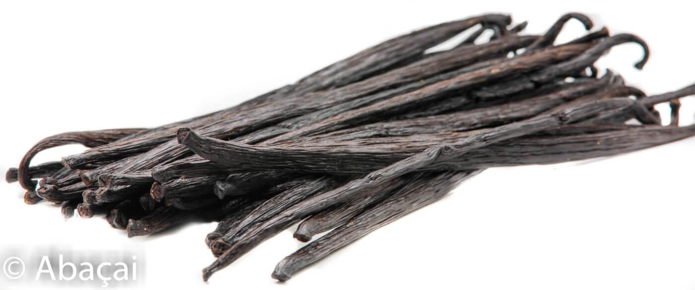 Vanille de Papouasie variété Planifolia