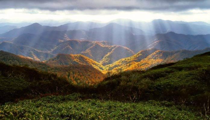 Montagne ou pousse le poivre sansho au Japon