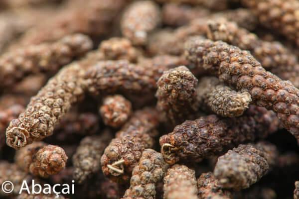 Le Comptoir du poivre long fruit de java