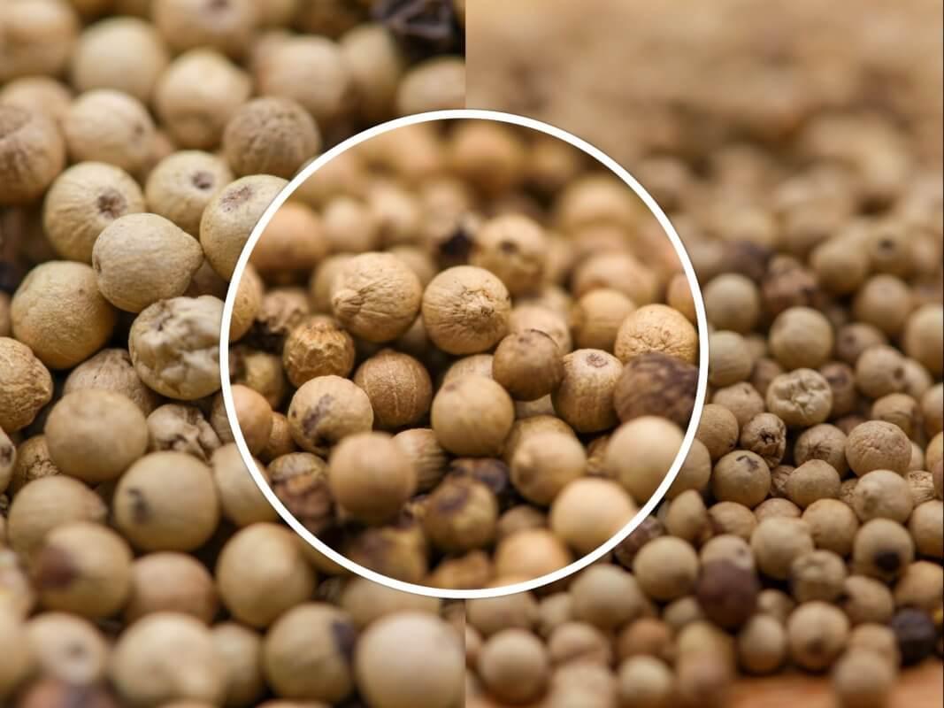Poivre Blanc de Muntok - Acheter le meilleur poivre blanc en grains