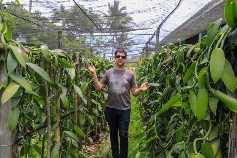 Arnaud dans une plantation de vanille Importateur de gousse de vanille