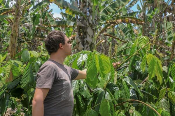 Acheter du guarana en poudre du Brésil