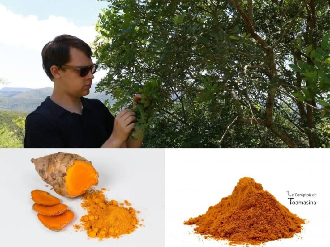 Quelle est la différence entre curcuma et curry