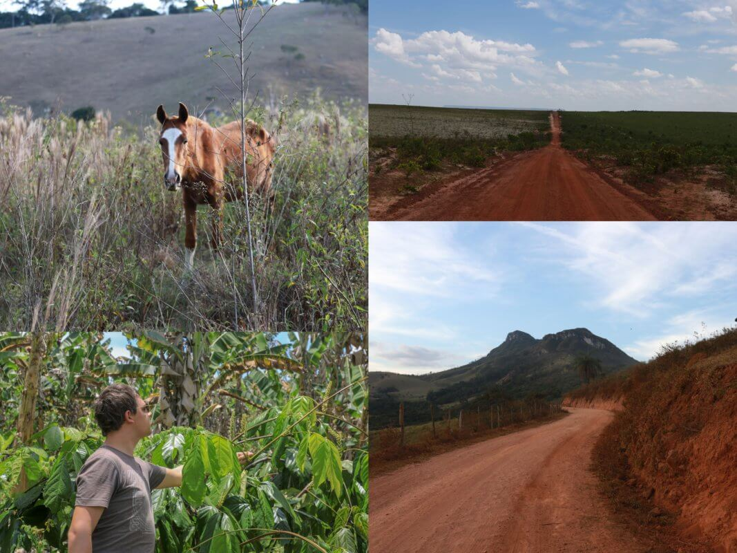 Brésil meilleur producteur de guarana au monde