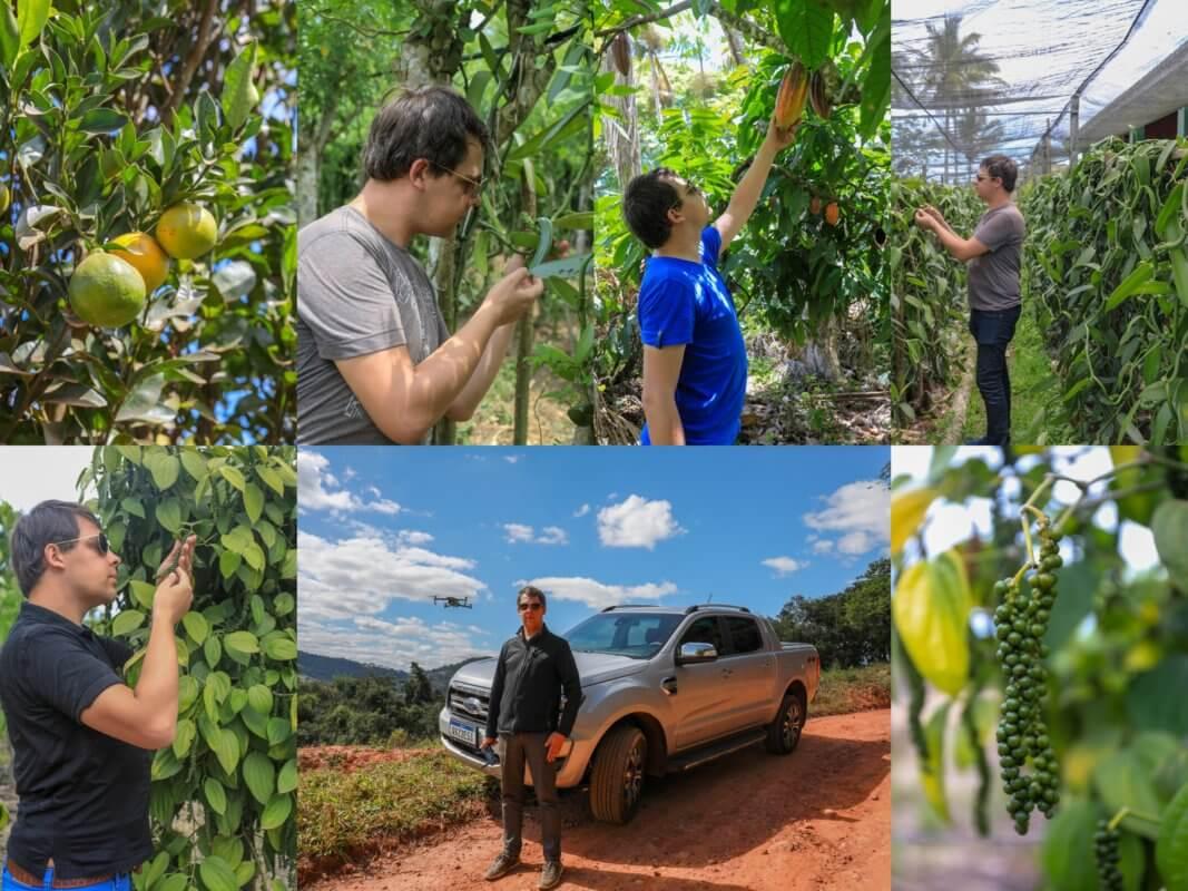 Mélanges d'épices - des plantations arnaud vanille, georges vanille, david baunilha plantaçao (david vanille plantation au Brésil)
