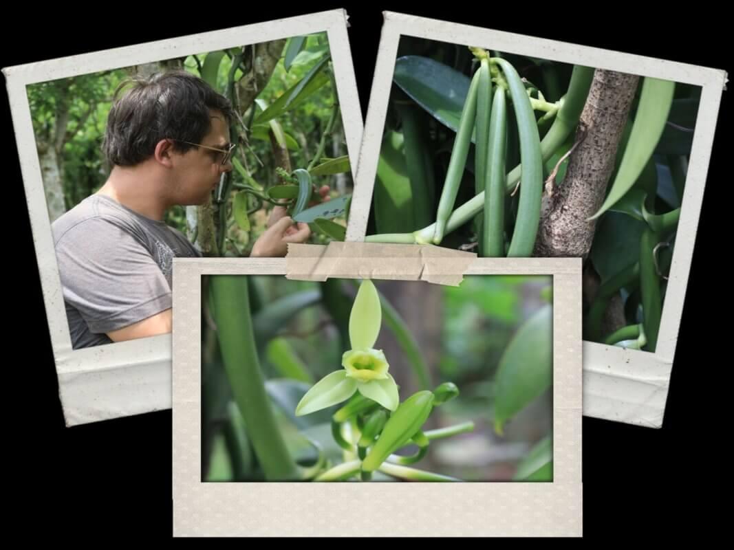 la-fleur-de-vanille-producteur-de-gousses-de-vanille-2048x1536