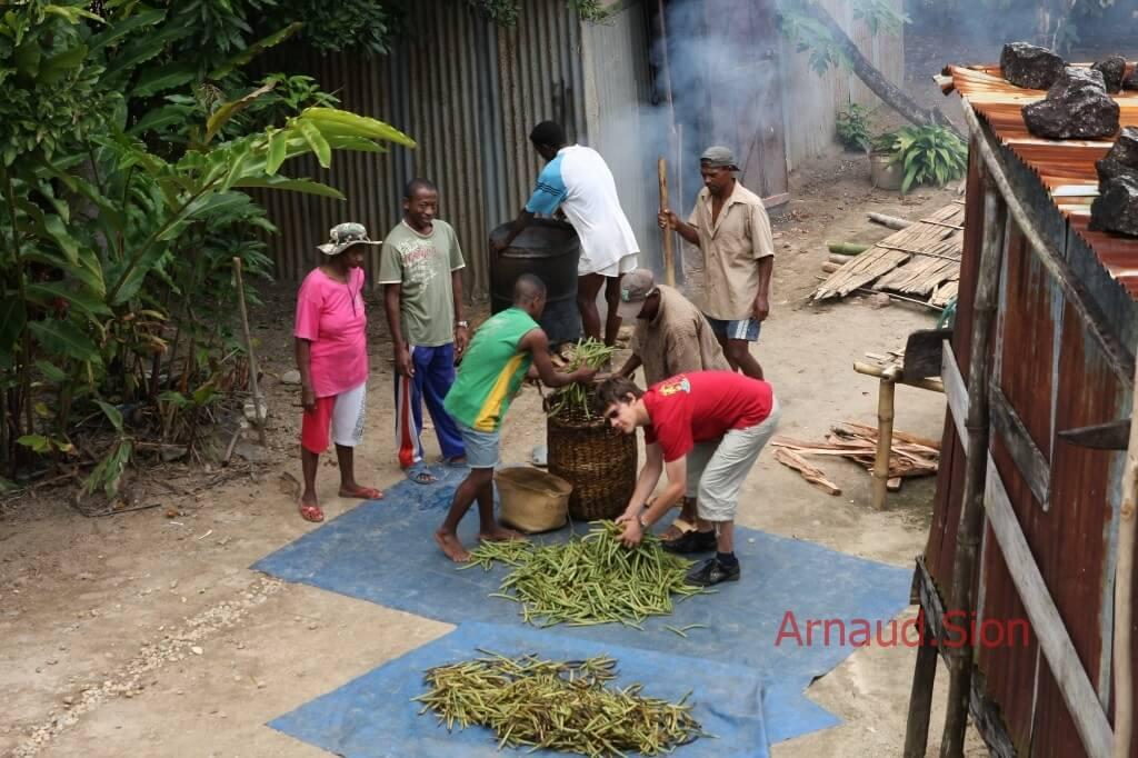 Formation d'Arnaud vanille à la culture de l'or noir de Madagascar - photo échaudage de la vanille