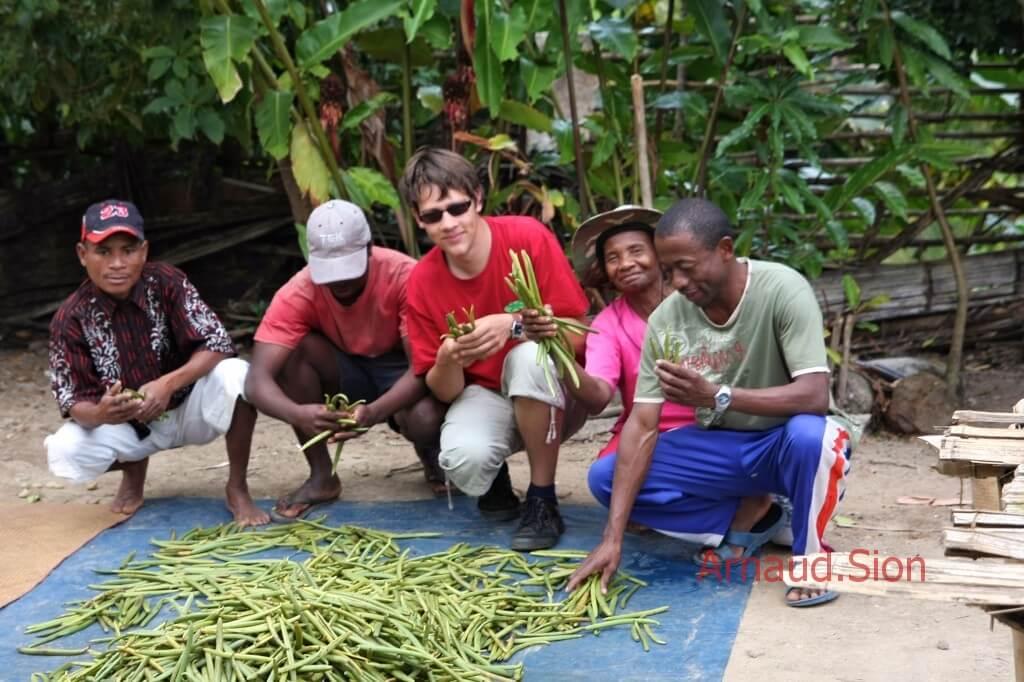 Gousse de vanille verte de Madagascar après la récolte