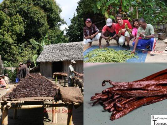 Le gout de la vanille de Madagascar
