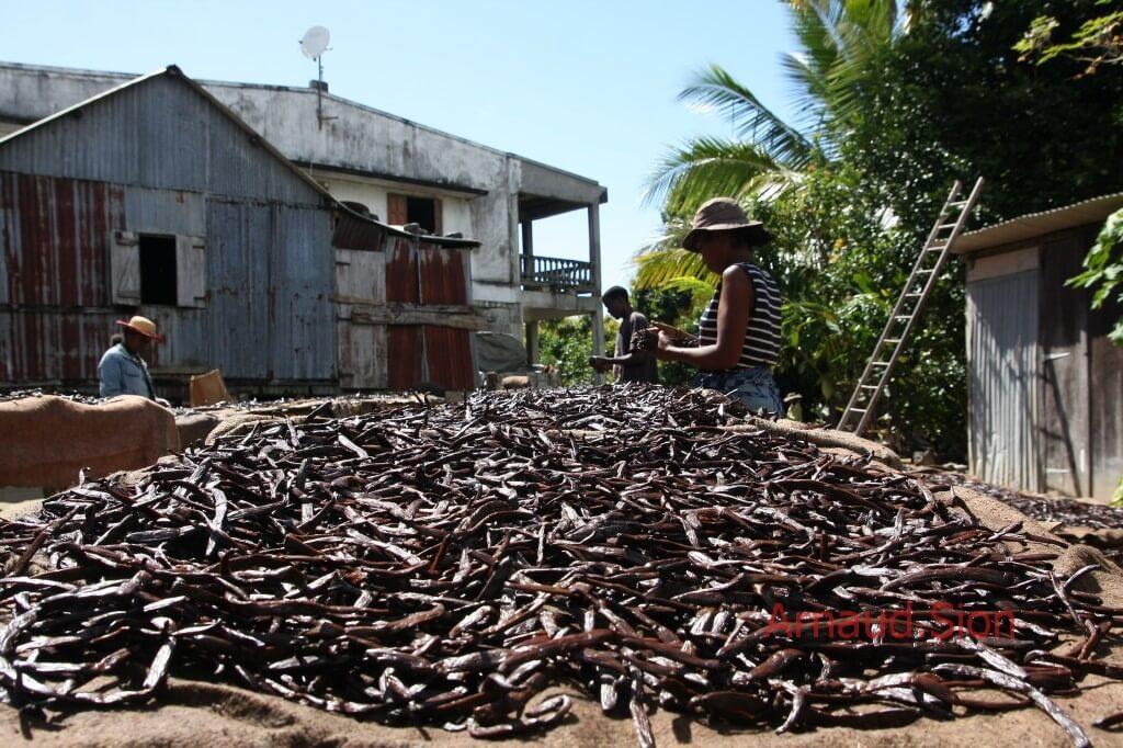 Plantation de vanille bourbon de Madagascar