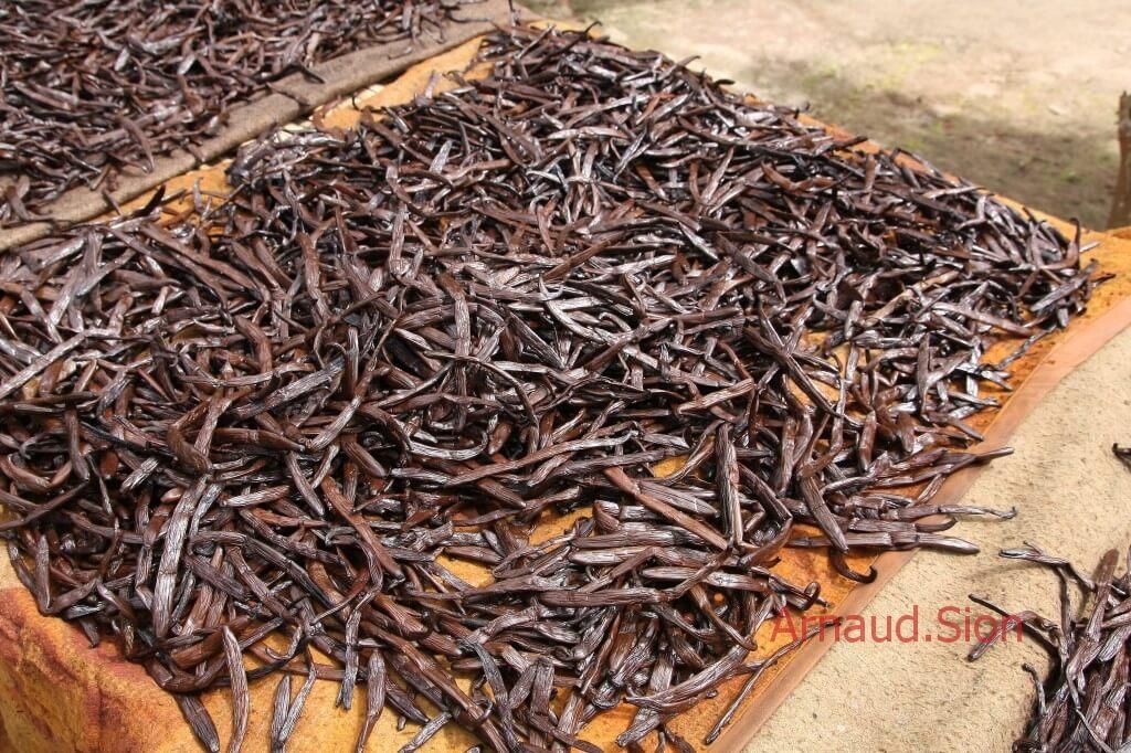 Vanille de Madagascar l'épice la plus vendue dans le monde