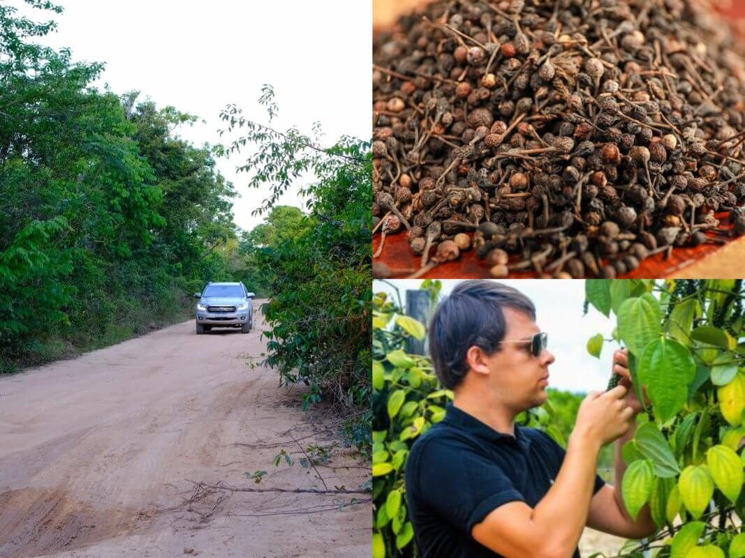 Comment utiliser le poivre sauvage noir de Madagascar _