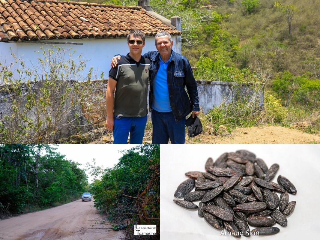 Quel est le goût de la fève de Tonka _ Spécialiste en Importation Exportation de fève tonka du Brésil